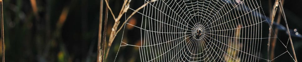 Spiderweb Gh